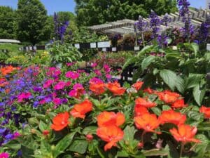 woods-annuals-IMG_8044